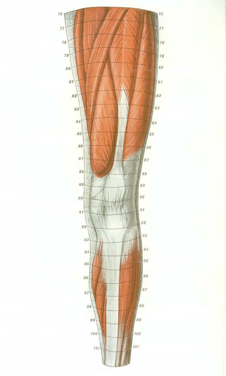 Cross Sectional Human Anatomy